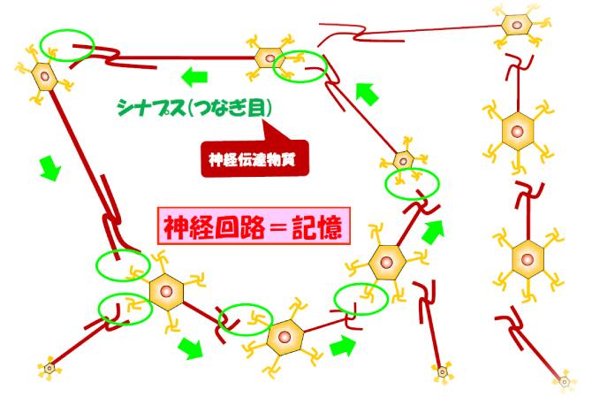 神経ネットワークの形成